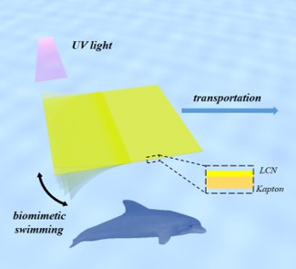 Haifeng Yu' group makes progress in light-driven biomimetic field by compositing liquid crystal materials and polymers