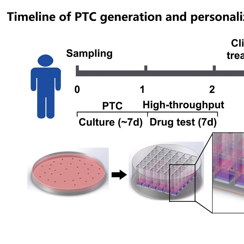 Minitumors  for drug testing in precision cancer therapy